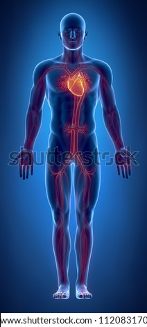 Cardiovascular system with glowing heart