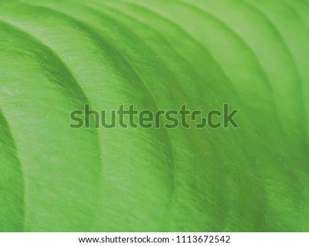 Christmas Leaf Name.Shutterstock Puzzlepix