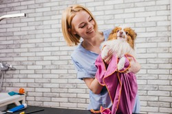 careful professional groomer dries dog's wool using towel after shower in bath. beauty and care procedures for dogs concept