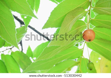 Carhop a fruit that tastes sweet tricky because it's difficult to maintain. Stock fotó ©