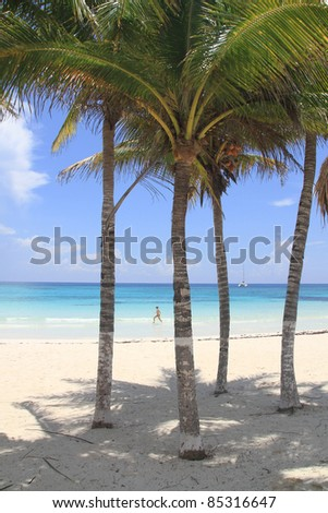 Caribbean beach view between the palm trees