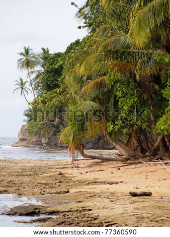 Caribbean coast with coconut trees in the Gandoca Manzanillo national wildlife refuge, Limon, Costa Rica