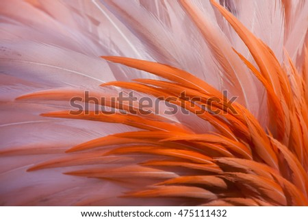 Shutterstock Caribbean flamingo (Phoenicopterus ruber), also known as the American flamingo. Plumage texture.