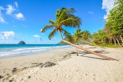 Caribbean Martinique beach coconut