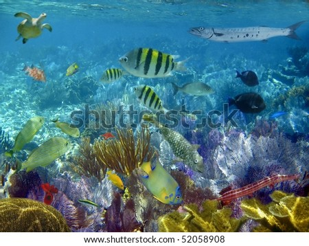 caribbean reef tropical fishes underwater sea view [Photo Illustration]