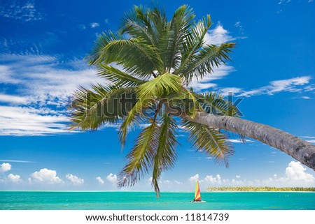 caribbean scenic with a palm and a boat in the middle before blue sky