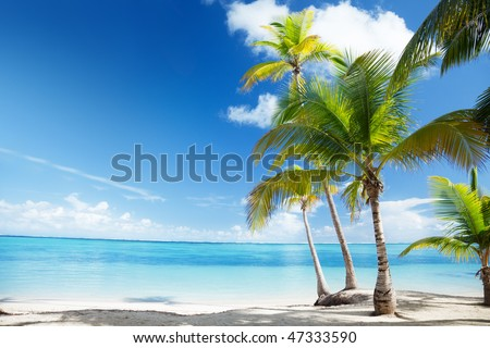Caribbean sea and coconut palms #47333590