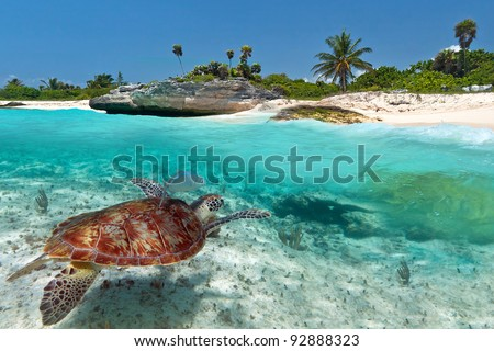 stock-photo-caribbean-sea-scenery-with-green-turtle-in-mexico-92888323.jpg
