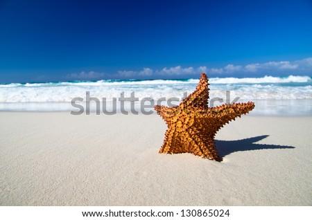 Caribbean starfish over sand beach