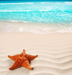 caribbean starfish over wavy white sand beach such a summer vacation symbol [Photo Illustration]