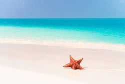 Caribbean tropical beach with a beautiful red starfish in white sand