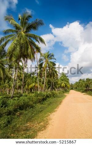 Caribbean Tropical coconut trees #5215867