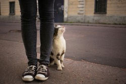 Caring for homeless pets concept. A street cat rubs against the legs of a volunteer.