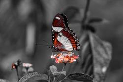 Carmine shot of a butterfly