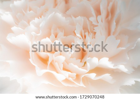 Carnation flower macro photo that shows a soft and delicate flower in a touch of light coral pink color. Photo stock ©