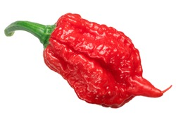 Carolina Reaper pepper (Capsicum chinense X C. frutescens), an extremely hot chile