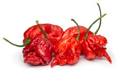 Carolina Reaper, the hottest chile pepper (Capsicum chinense ), whole ripe pod, isolated on white background. Superhot or extremely hot chile pepper