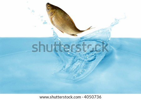 carp is jumping under blue water