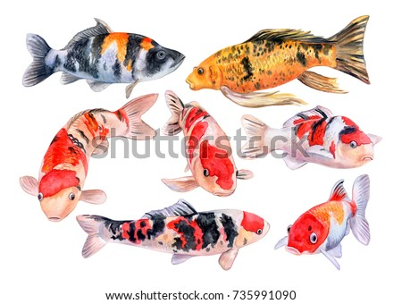 Carp koi. Fish isolated on white background. Watercolor. Illustration. Clip-Art