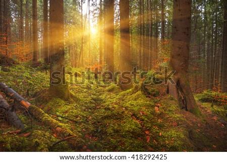 Carpathian Dense