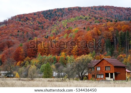 Carpathian forest in autumn #534436450