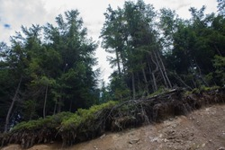 Carpathian landscapes. Forests and mountains of the Carpathians.