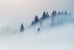 Carpathian Mountains. The tops of trees sticking out of the fog.