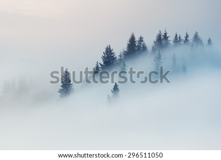 Carpathian Mountains. The tops of trees sticking out of the fog. #296511050