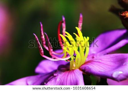Carpel close up of Indian Rhododendron flower with soft focus and blur background. Clouse up of carpel in blur background.