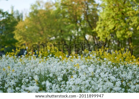 Photo of carpet of flowers in the forest, blooming forest. High quality photo