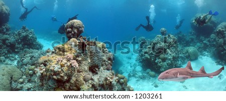Carpet Shark and divers swimming over reef