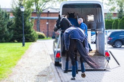 Carriage for horses . Auto trailer for transportation of horses . transportation livestock . Horse transportation van , equestrian sport