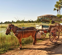 Carriage horse  in the city Ava Myanmar for travel destinations.