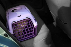 Carrier box with cat in car