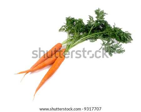 carrot on the white