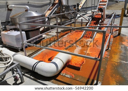 Carrot processing plant: Product is washed before being carried along on a conveyor belt