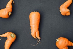 Carrot root vegetables isolated against the black color background. Ugly carrot root vegetables with sprouts grown on natural background. Fresh carrot vegetable with roots grown.
