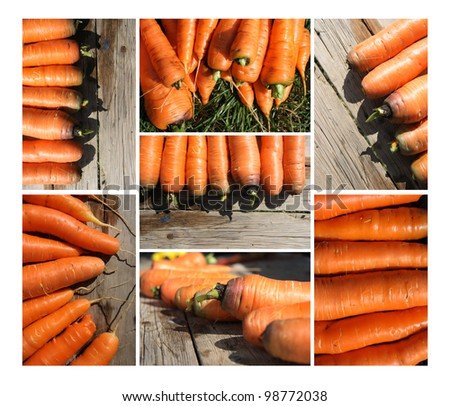 Carrots collection for your design