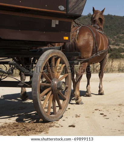 Cart-horse harnessed with a carriage