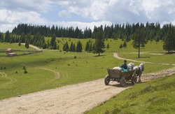 Cart pulled by horses on a mountain road.Location: Apuseni Mountains,Transylvania,Romania.