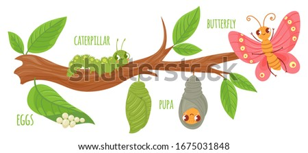 Cartoon butterfly life cycle. Caterpillar transformation, butterflies eggs, caterpillars and pupa. Insects growing  illustration. Insect metamorphosis stages. Cute wildlife on tree branch