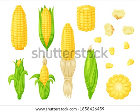 Cartoon corn agriculture meal harvesting set. Golden maize corncob delicious vegetable harvest, popcorn corny grain, sweet corn seed and stalk illustration isolated on white background Сток-фото ©