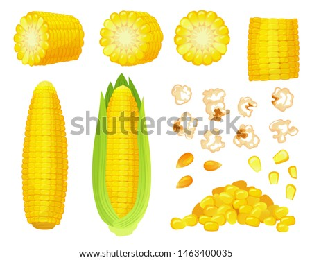 Cartoon corn. Golden maize harvest, popcorn corny grains and sweet corn. Ear of corn, delicious vegetables or corns cob. Agriculture meal harvesting isolated  illustration icons set