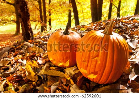Carved Halloween Jack O Lanterns of different shapes and sizes in forest.