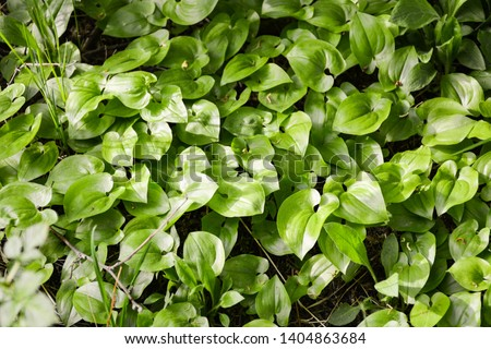 Carved leaves of a water plant glisten in the sun