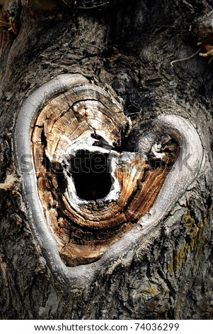 Carvings heart on tree trunk