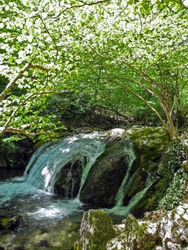 Cascading river with beautiful rapid in the green spring forest. Arch of green tree branches above the river. Crimean mountains at spring.