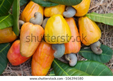 Cashew apples with leaves