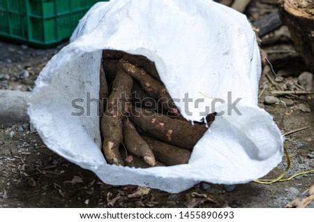 Cassava, also called manioc, yuca, balinghoy, mogo, mandioca, kamoteng kahoy, tapioca and manioc root, a woody shrub of the Euphorbiaceae family native to South America. Photo taken in Peru #1455890693
