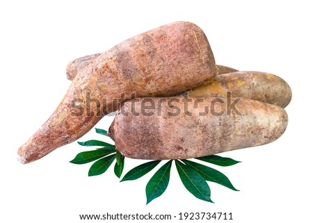cassava tubers fresh on leaves isolated white, pile cassava manioc in top view, yucca root for flour products, raw materials for tapioca starch industry, tubers tapioca or manioc root, rhizomes manioc Foto stock ©